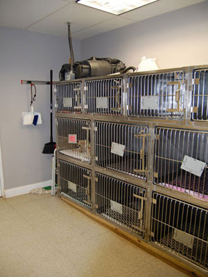 Our kennel area